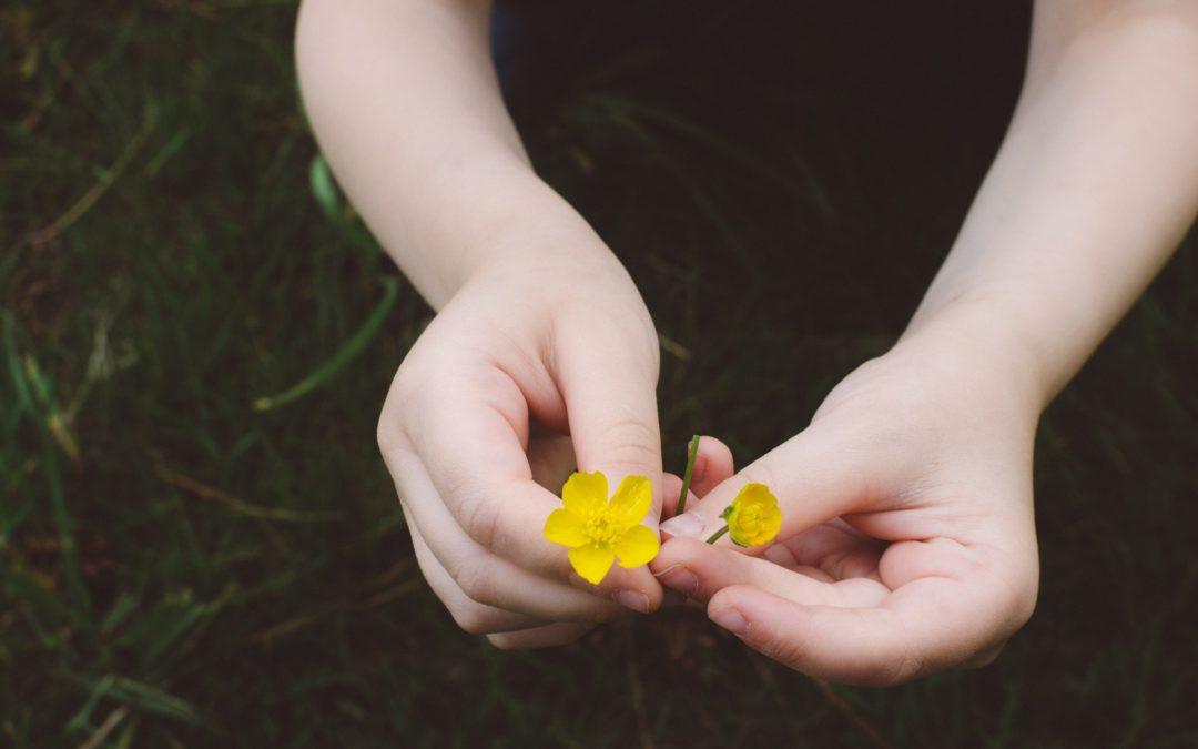 Activité : botanique – Etudier la composition d'une fleur